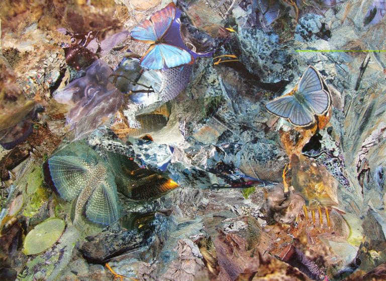 Тропик Рыбы